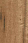 Tropical Almond Tree Wood/ Almendrillo sample