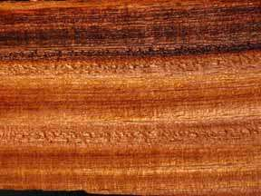 Espave Wood / Espavel sample